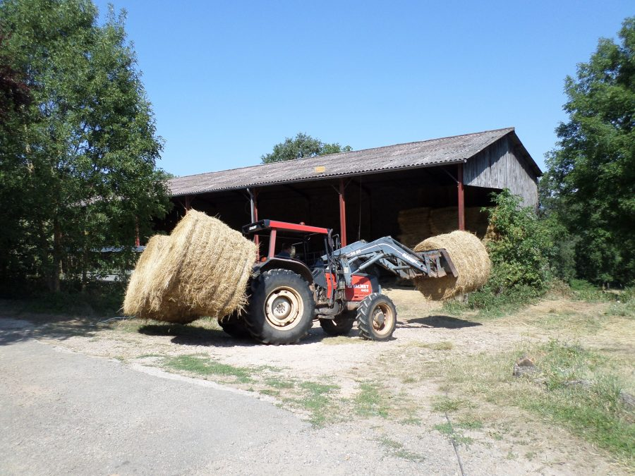 stocking the hay