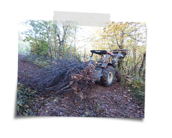 woodland managment at the farm
